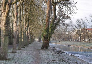 Blick-auf-die-Lindenstrasse