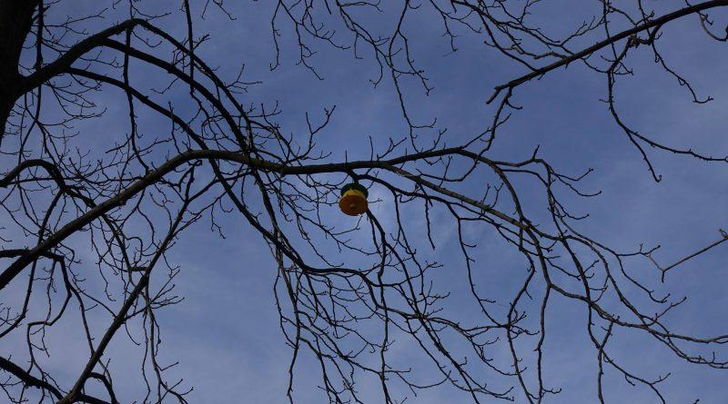 Das Baumgutachten
